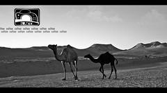 (     ) Tags: canon eos saudi arabia 5d sultan