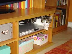 I don't like the hoover! (Nattydreadful) Tags: cat pipsqueak kissablekat