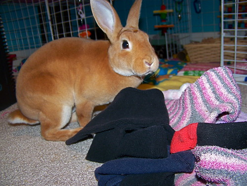I disapprove of mismatched socks in front of my cage!