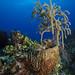 Coral Reef-Jillian Morris