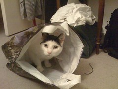 Like a cat in a bag