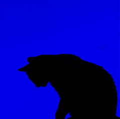(Bonnie Mac Photography (hope_2day)) Tags: november blue sky color colour beautiful silhouette cat fur awesome attitude greatshot 2008 coolblue mywinners theunforgettablepictures damniwishidtakenthat