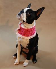 Bean Wearing More Pink (Beantown Handmade) Tags: handmade beantown