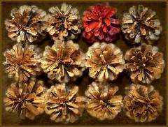 Make A Difference (Ronaldo F Cabuhat) Tags: twelve pinecones cabuhat redpinecone goldenpinecones spottheodd