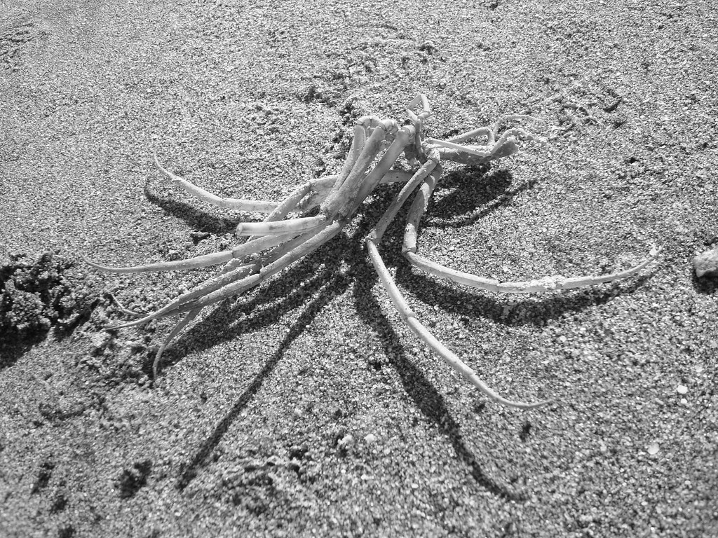 Marble Point: Sea Spider