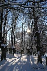 Luz y sombras (andresbasurto) Tags: naturaleza color blanco sol azul nieve cielo rbol bizkaia sombras reflejos urkiola hayedo resplandor goldstaraward andresbasurto