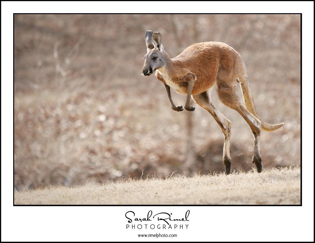 feb zoo 09