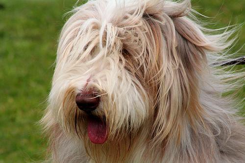 shaggy dog story foxypar4