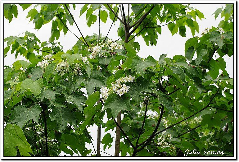 仁山植物園 (7)