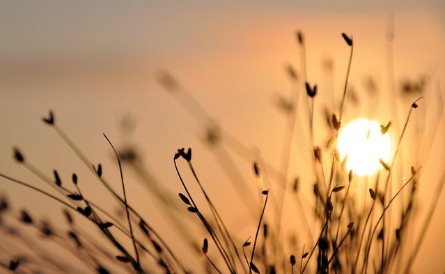 Seeking Sun