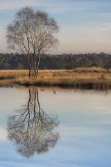 Solist (Gies!) Tags: sunrise landscape nederland moors haaksbergen