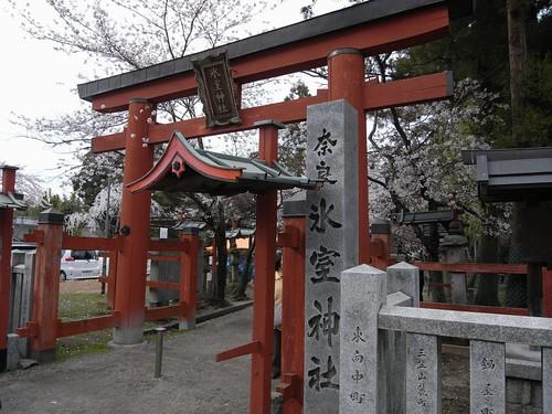 氷室神社(しだれ桜)-01