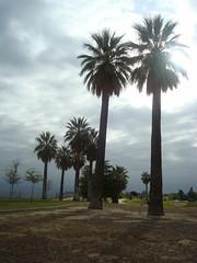 Palms Like Stonehenge