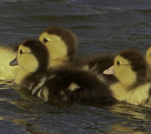 Reedy Pond-9
