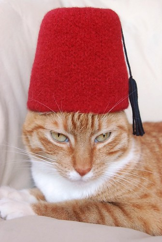 cat in hat. International Cat Hat: Turkey