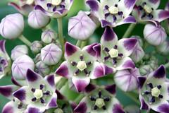 flowers , wild.. (xeno(x)) Tags: flowers light color macro art nature america canon 2008 excellence xeno cubism 40d mywinners aplusphoto excapturemacro 4mazingorgeoushotsoflowers