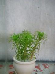 Thủy Sinh Tuấn Anh-Chuyên cây & Rêu Thủy Sinh, Cá Cảnh Biền & Hồ Cá Cảnh Biển - 39