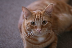 Herman (Pam's Cat)