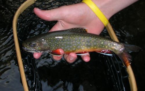Savage River Fly Fishing Report | BACKWATER ANGLER