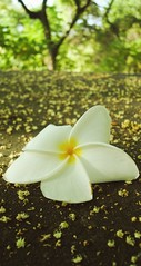 Devolva me (Orioon ) Tags: sunlight flower tree beautiful ecuador loneliness bosque lonely solitary guayaquil