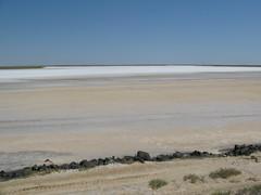 Salt flats (tagois) Tags: kazakhstan tengiz  koschagyl