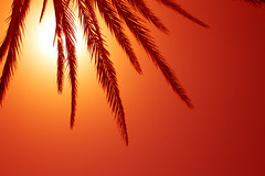 h o t (ion-bogdan dumitrescu) Tags: wallpaper españa sun hot hotel islands spain warm espana palmtree tenerife canary spania bitzi progi ibdp mg2213mod findgetty ibdpro wwwibdpro ionbogdandumitrescuphotography