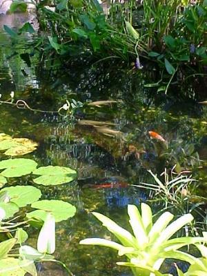 2005 Garden Tour Grdn6 no4