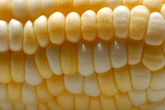 Macro Corn by smiles7