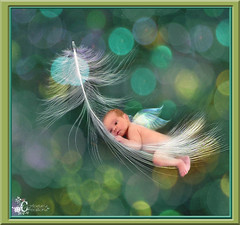 Bokeh Baby (Cytosue) Tags: baby photoshop wings bokeh feather fairy fantasy frame chandler magical floatingfeather hbw colormania bokehwednesday