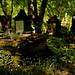 Cmentarz Żydowski przy ulicy Brackiej w Łodzi
