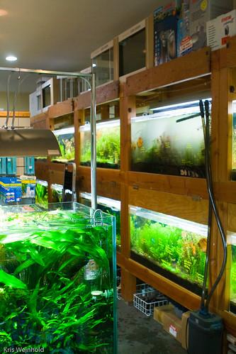 Aqua Forest Aquarium