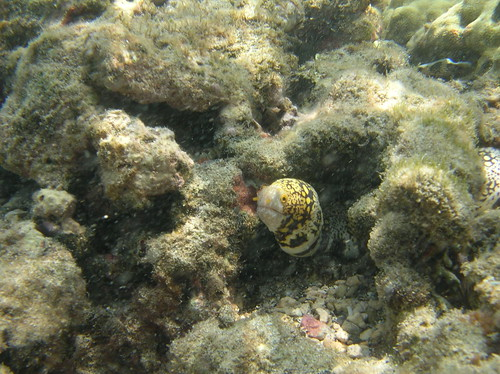 Oahu - Hanauma Bay - Snowflake Eels