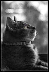 Polly Selective Color Eye Only (Caitlyn Bom) Tags: color cat canon photography rebel kitten polly selective selectivecolor xti 400d canonrebelxti kissablekat isawyoufirst saadkhan caitlynbom merijaanphotographycom caitlynbomcom saadiqbal