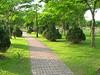 Green path (DSCN0156)
