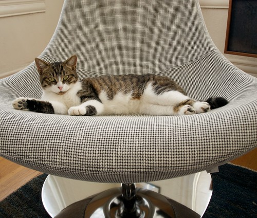 New cat. New chair.