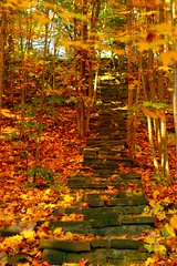 Stairway to Heaven (Ian Muttoo) Tags: park red ontario canada color colour fall colors yellow stairs stair colours hill gimp hillside mississauga riverwood ufraw af5018d riverwoodpark dsc8461edit tgamphotodeskcolour