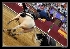Tro pentagonal (Chema Concellon) Tags: plaza espaa caballo andaluca spain europa europe bandera toros albero toro castilla palencia tro plazadetoros tauromaq