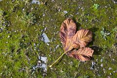 listek jesienny (p.lorenc) Tags: lilla lorencowie