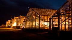 No People In Glasshouses (widdowquinn) Tags: night scotland farm farming science research greenhouse glasshouse perthandkinross invergowrie
