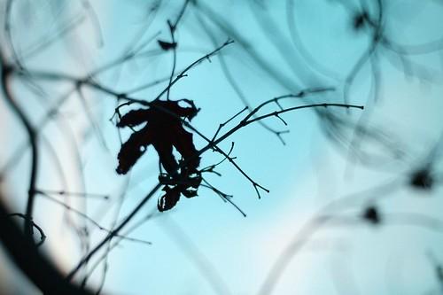 leaves 025-2