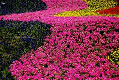 Flower river (unlimited inspirations) Tags: world park travel pink flowers blue friends red plants art love nature beautiful beauty yellow river garden fun design dance colours creative best memory colourful curve summers goldstaraward mygearandme mygearandmepremium mygearandmebronze mygearandmesilver mygearandmegold mygearandmeplatinum mygearandmediamond