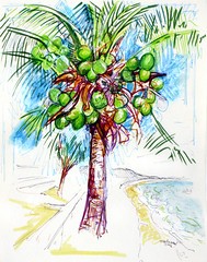Portrait of a Mui Ne Coconut Tree