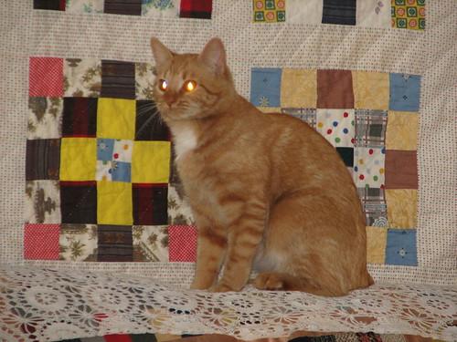 cat attains enlightenmet #3