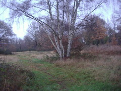 Ditton Common5