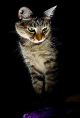 kitten info