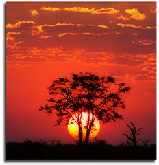 T.I.A.  This Is Africa (Chad Galloway Photo) Tags: africa sunset sun tree nationalpark african sony safari botswana chobe acacia orton settingsun naturesfinest africansunset a700 aplusphoto theunforgettablepictures damniwishidtakenthat lightiq