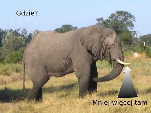 Elephant_in_Botswana
