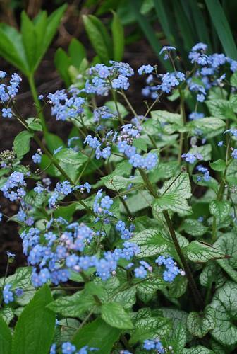 Spring Garden (3)