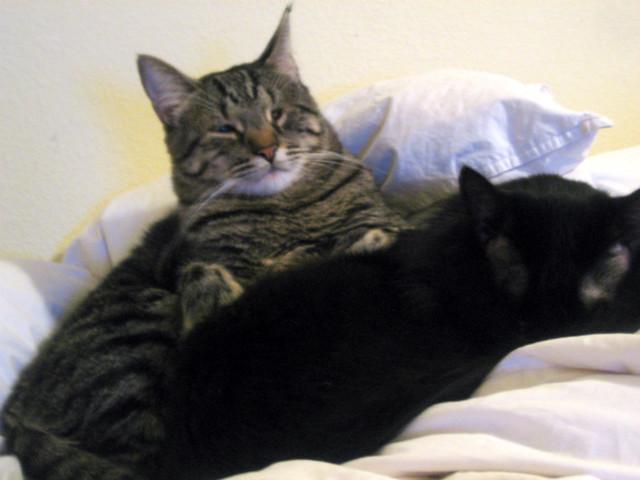 5.18.11 kitties