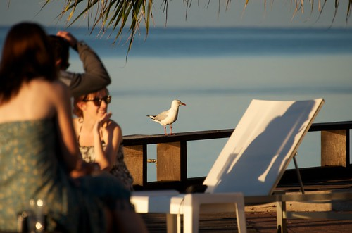 A seagull observing the holiday-goers on the Heron Island walkway